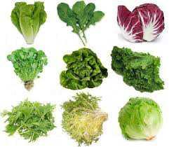 lettuceTypes